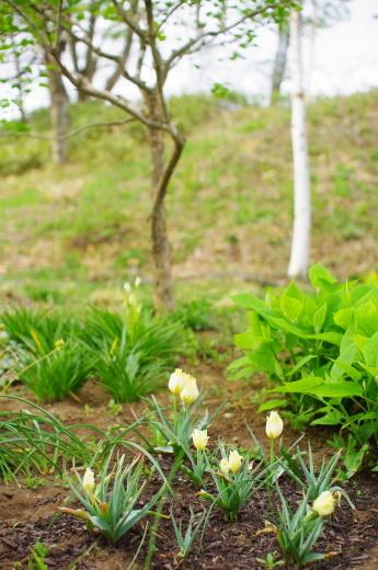 5月も半ばに、ほぼ梅雨入り_c0110869_12430931.jpg