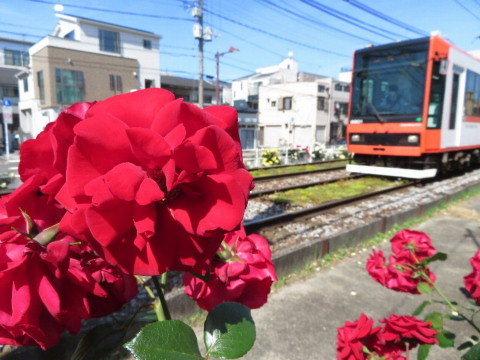 マスメディアが使っても、使いたくない日本語。_b0141773_20515292.jpg