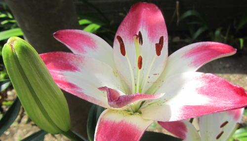 小さな庭の花木_c0220597_21100828.jpg