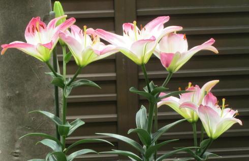 小さな庭の花木_c0220597_21124493.jpg