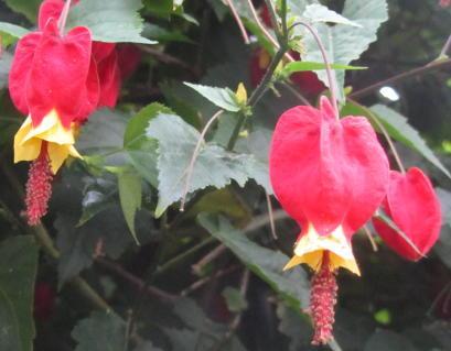小さな庭の花木_c0220597_21152709.jpg