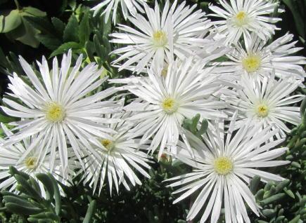 小さな庭の花木_c0220597_21162605.jpg