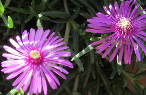 小さな庭の花木_c0220597_21164267.jpg