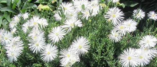 小さな庭の花木_c0220597_21165752.jpg