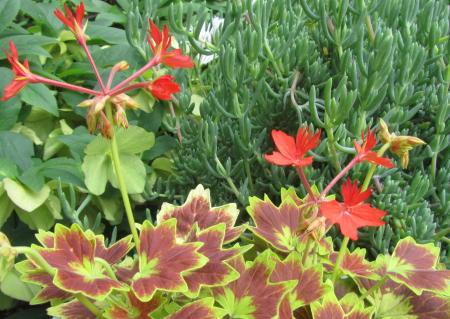 小さな庭の花木_c0220597_21174133.jpg