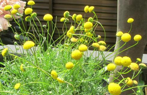 小さな庭の花木_c0220597_21180376.jpg
