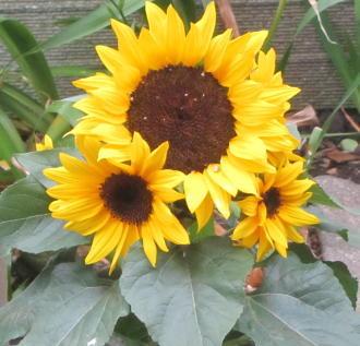 小さな庭の花木_c0220597_21182605.jpg