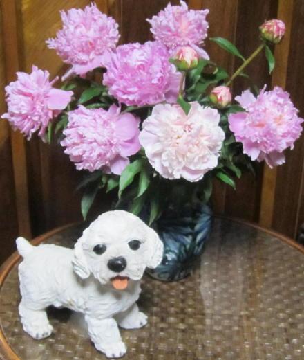 小さな庭の花木_c0220597_21194167.jpg