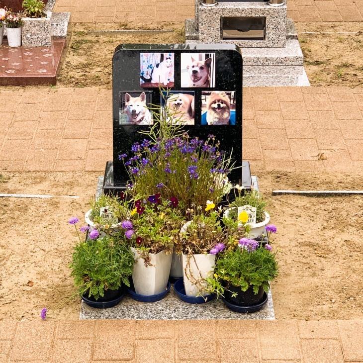 ペット霊園のお墓のこと_b0308135_15523472.jpg