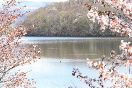 春紅葉の山と~5月の美瑛_d0340565_20411474.jpg