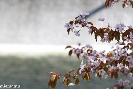 春紅葉の山と~5月の美瑛_d0340565_20412285.jpg