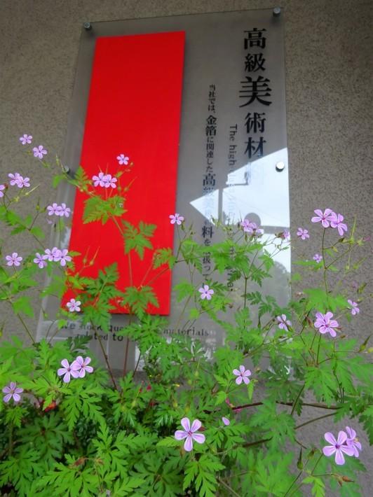 ヒメフロウが咲きました!_c0225067_14315511.jpg