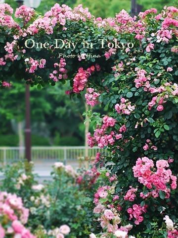 薔薇のアーチ: One Day in Tokyo_f0245680_15351881.jpg