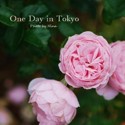 薔薇のアーチ: One Day in Tokyo_f0245680_15354537.jpg