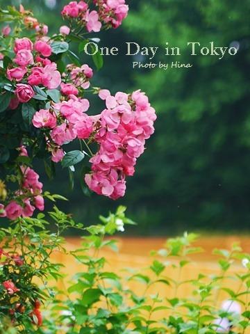 薔薇のアーチ: One Day in Tokyo_f0245680_15361425.jpg