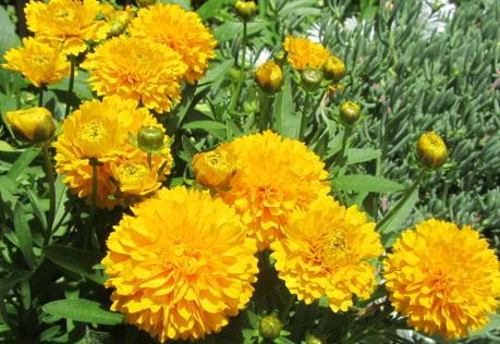 小さな庭の花木_c0220597_05131632.jpg