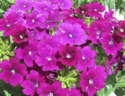 小さな庭の花木_c0220597_07542203.jpg
