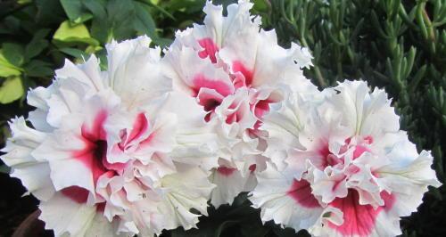 小さな庭の花木_c0220597_07552658.jpg
