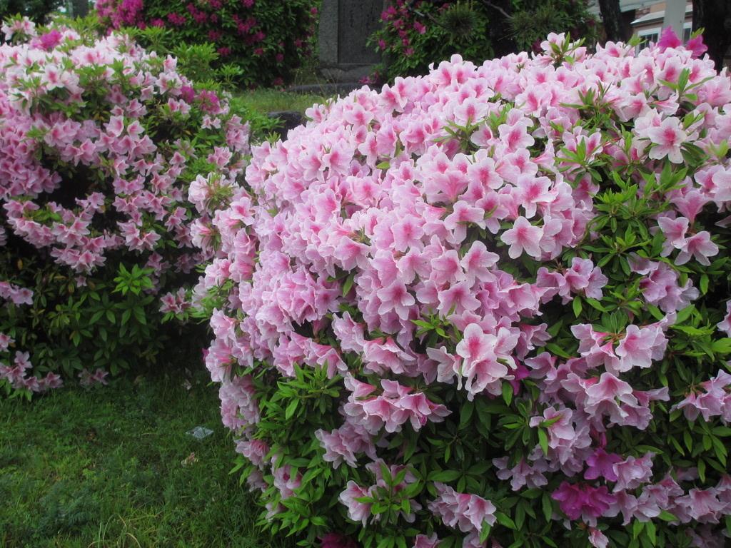 雨に濡れる花_d0077106_14234751.jpg