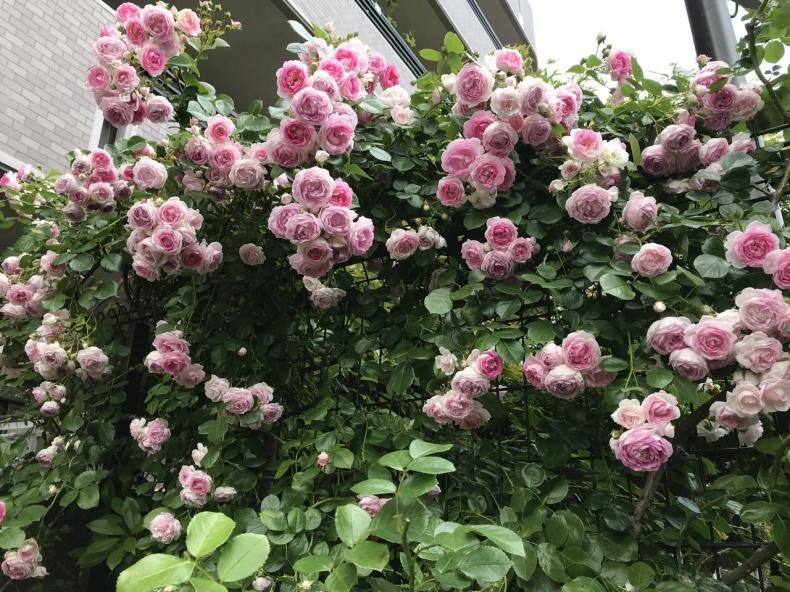薔薇のお茶会②2021/5/17_d0085018_16255318.jpeg