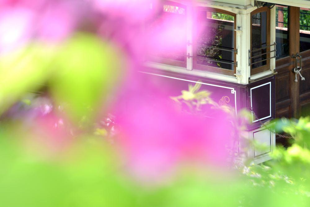 品川燈台電停付近のツツジと京都市電_e0373930_20221015.jpg