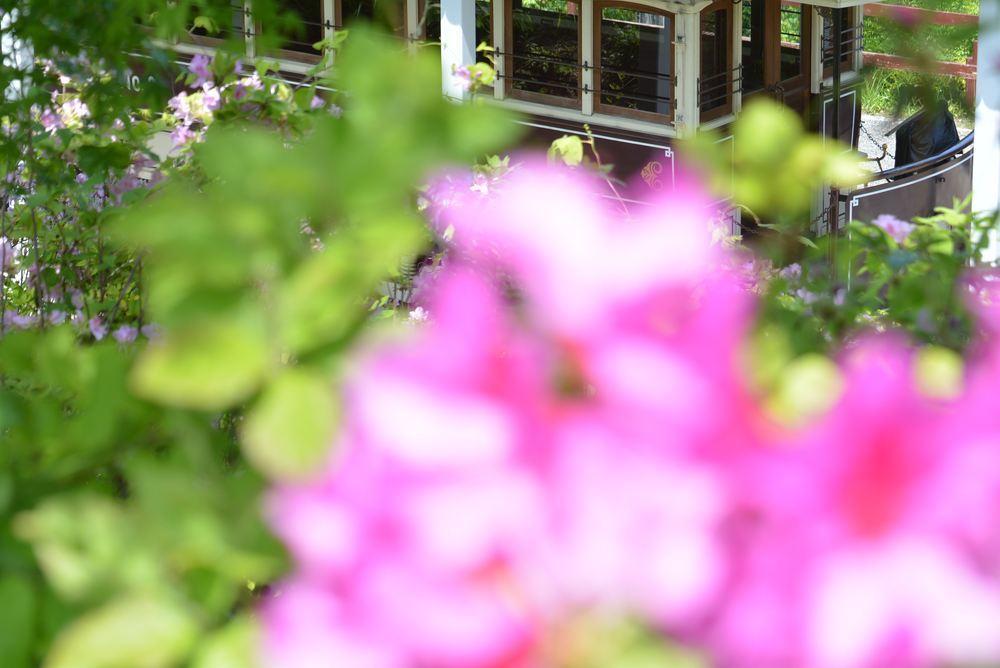 品川燈台電停付近のツツジと京都市電_e0373930_20221055.jpg