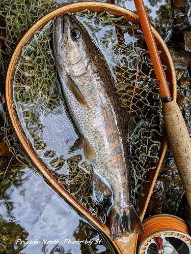 昨日の釣り_d0261148_16345539.jpg