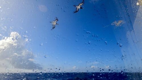 日本南端、波照間、西表島サンセットライブツアー【2:波照間島】_e0071652_21053878.jpeg