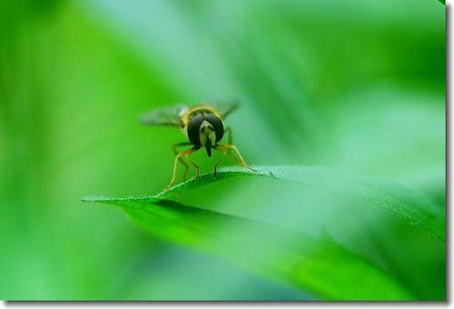 庭に来る小さい虫たち_d0089358_16363059.jpg