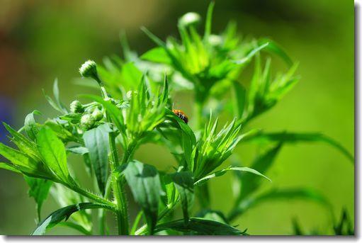 庭に来る小さい虫たち_d0089358_16364298.jpg