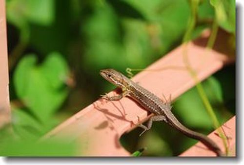 庭に来る小さい虫たち_d0089358_16375744.jpg