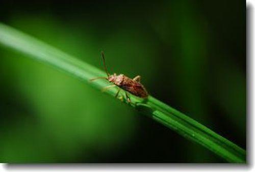 庭に来る小さい虫たち_d0089358_16390035.jpg