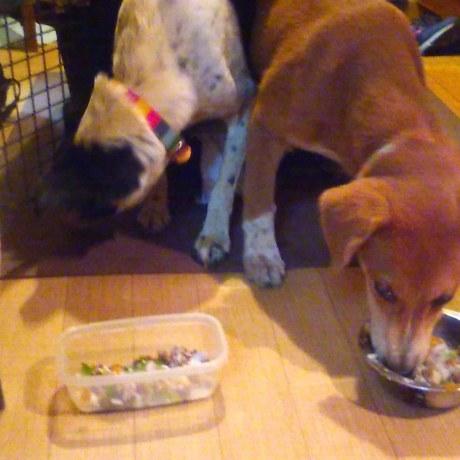 沖縄から母娘犬やってきました!_c0372561_00031232.jpg