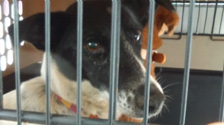 沖縄から母娘犬やってきました!_c0372561_00035593.jpg