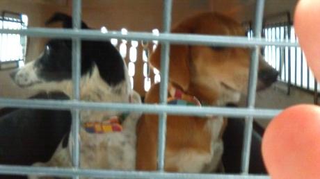沖縄から母娘犬やってきました!_c0372561_00040569.jpg