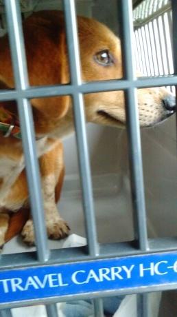 沖縄から母娘犬やってきました!_c0372561_00060216.jpg