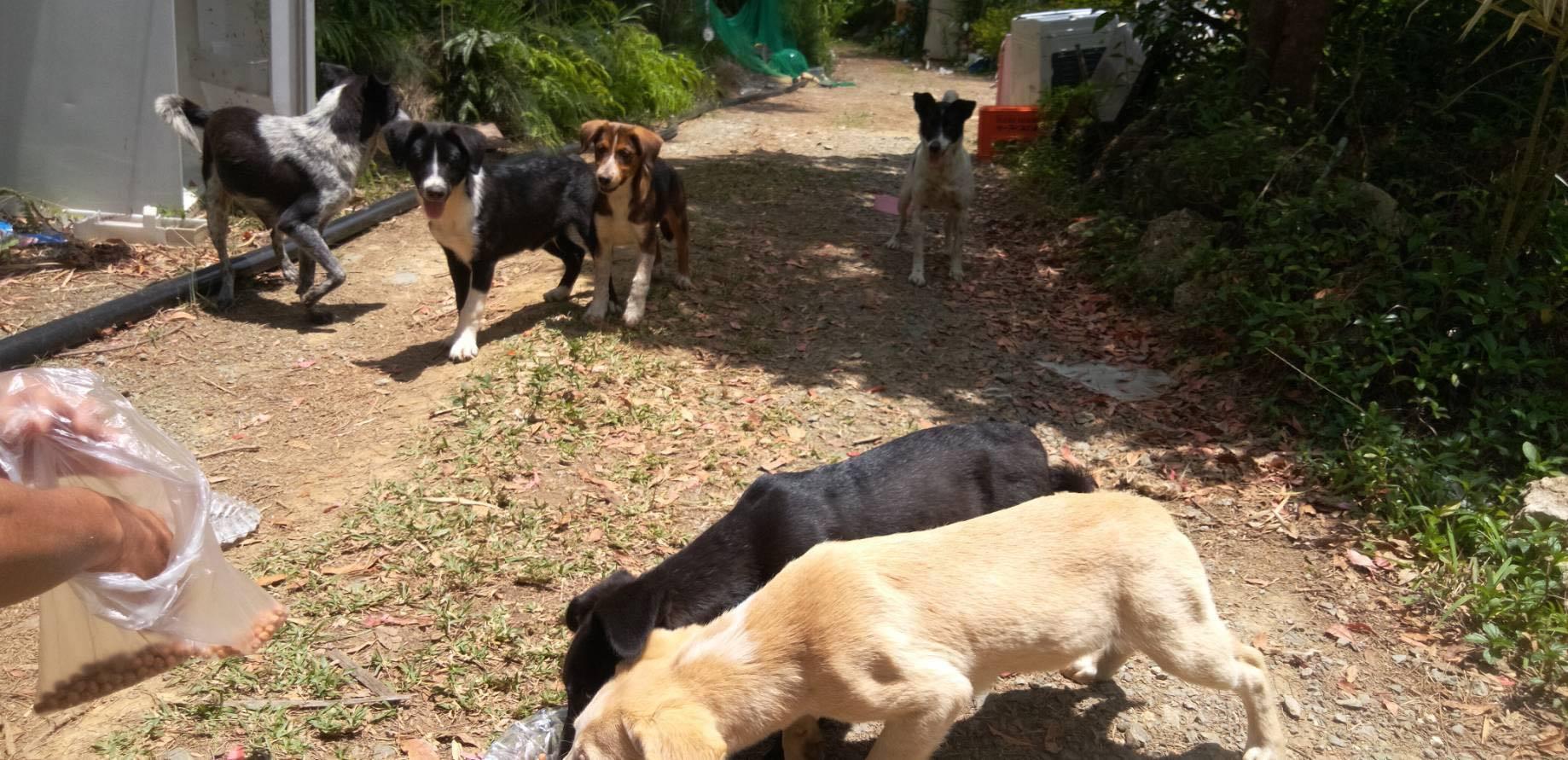 沖縄から母娘犬やってきました!_c0372561_00453621.jpg
