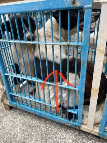 沖縄から母娘犬やってきました!_c0372561_00461368.jpg