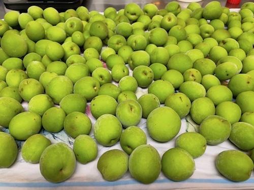 梅の収穫_f0053164_21151086.jpeg