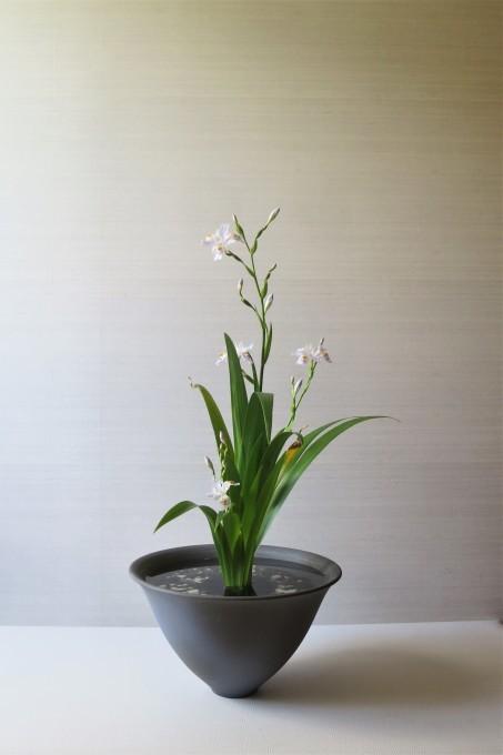 レモンの花 / 著莪、杜若_a0214206_21473042.jpg