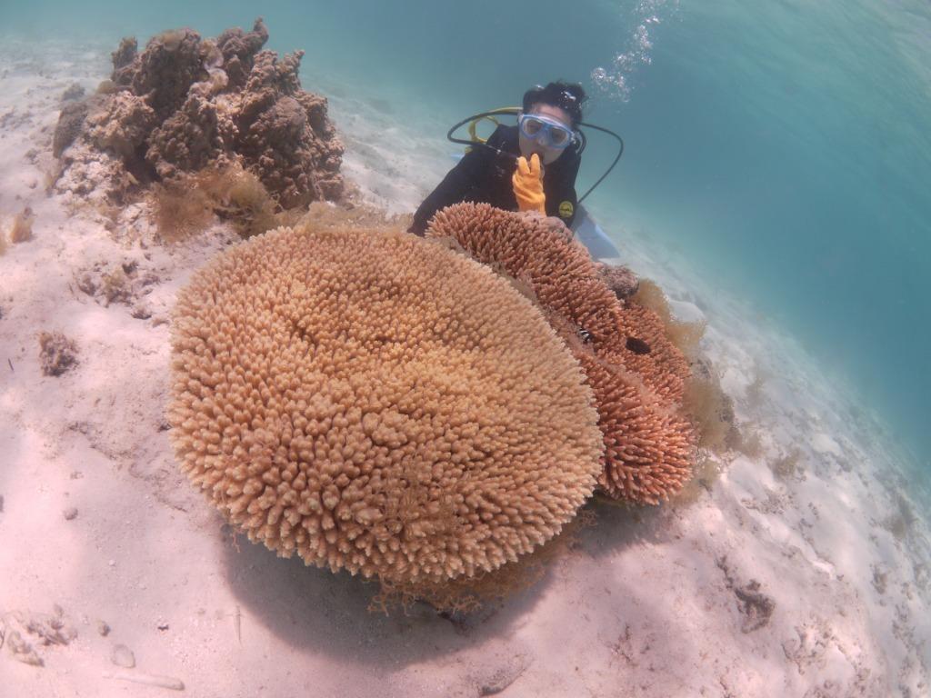 美しい海で体験ダイビング~♪_a0189838_09303957.jpg
