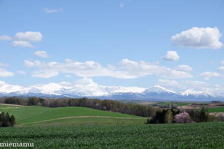 桜と十勝岳連峰と畑VOL.2~5月の美瑛_d0340565_20334712.jpg