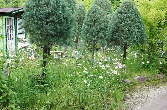 白のお花がいっぱい_e0365880_19203451.jpg