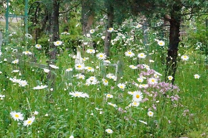白のお花がいっぱい_e0365880_19205848.jpg