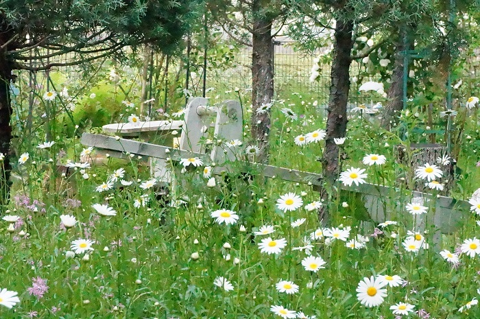 白のお花がいっぱい_e0365880_19211145.jpg