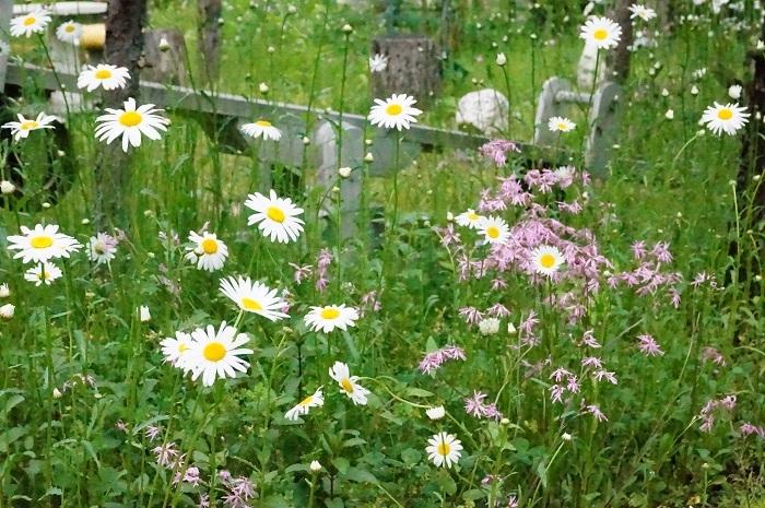 白のお花がいっぱい_e0365880_19212289.jpg