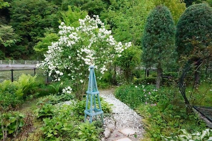 白のお花がいっぱい_e0365880_19220539.jpg