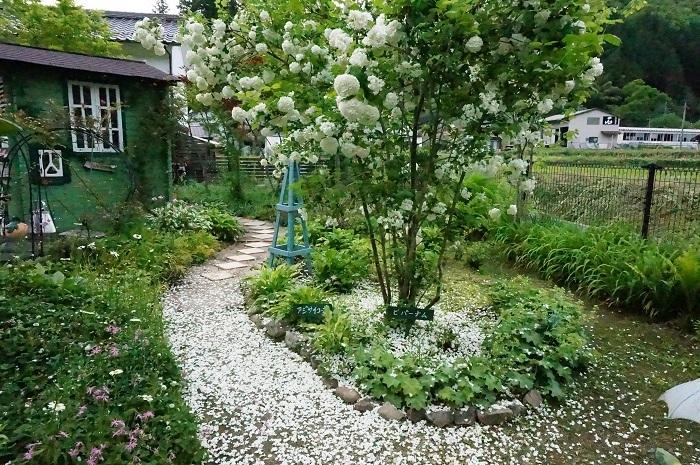 白のお花がいっぱい_e0365880_19224701.jpg
