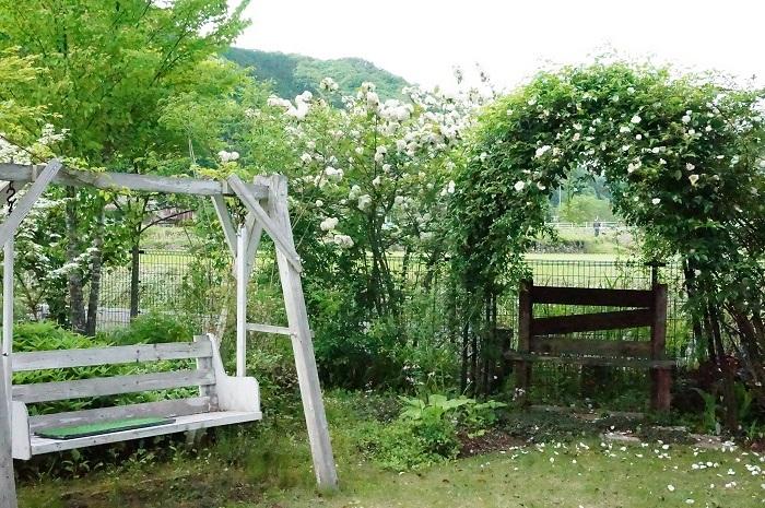 白のお花がいっぱい_e0365880_19232098.jpg