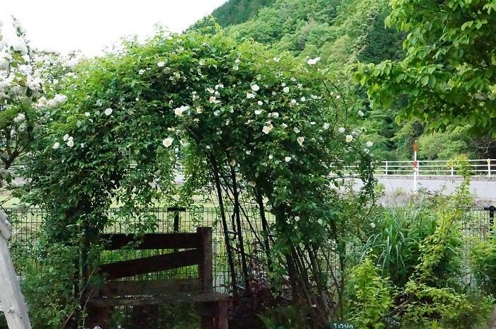 白のお花がいっぱい_e0365880_19233526.jpg
